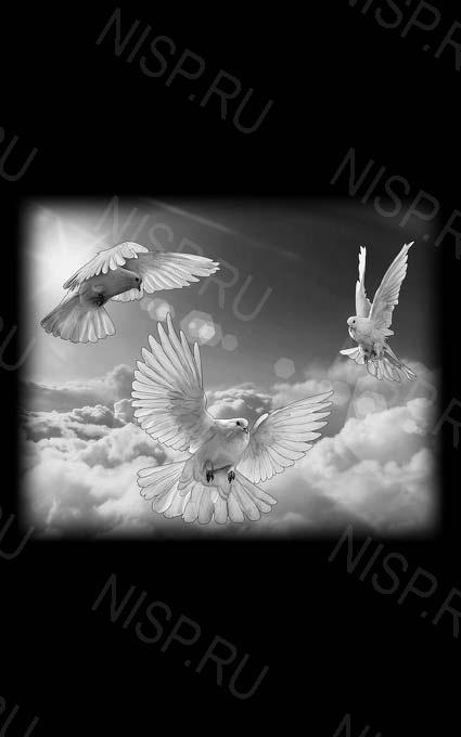 центре анапы, картинка на обороте памятника жизнь человека увлекавшегося голубями фотографий альбом можно